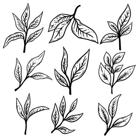 Ilustración de Set of hand drawn tea leaves illustrations. Design element for poster,label, card, banner, flyer. Vector illustration - Imagen libre de derechos