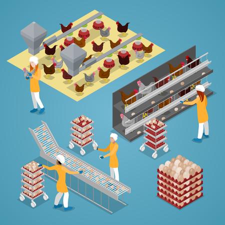 Illustration pour Isometric Chicken Farm Poultry. Organic Eggs Production Line. Vector flat 3d illustration - image libre de droit
