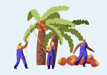 Ilustración de Palm Oil Producing Industry Concept with Workers Collecting Fruits or Coconuts from Palm Tree, Seasonal Work, Laborers Taking Crop on African or Asian Plantation, Cartoon Flat Vector Illustration - Imagen libre de derechos