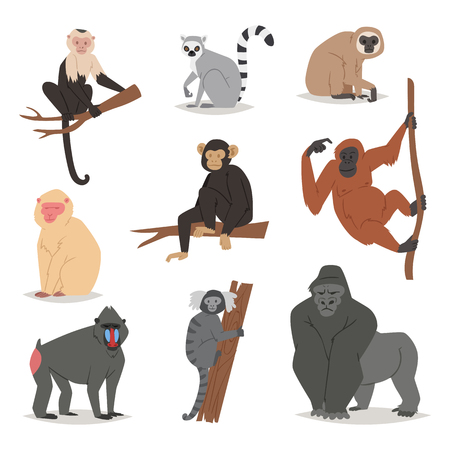Ilustración de Monkey vector set cute animal macaque monkeyish cartoon character of primate chimpanzee, gibbon and babbon monkeyshines illustration isolated on white - Imagen libre de derechos