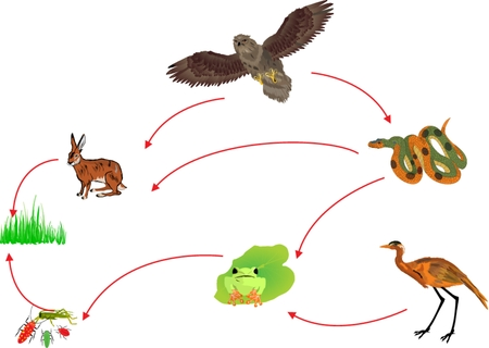 Illustration pour Food chain biological circle of nature illustration - image libre de droit