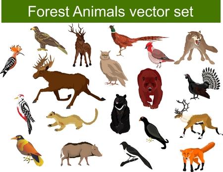 Woodland animals mega set vector illustration, deer, bear, pheasant, eagle, owl,capercaillie, hoopoe, marten