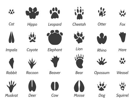 Photo pour Wildlife animals black footprints set on white background with signs. Vector icons set - image libre de droit