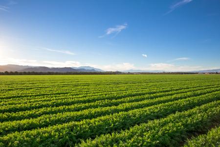 Photo pour Organic Farm Land Crops In California Multiple layers of mountain view and fertile farm land in California. Lots of colors and clear skies. - image libre de droit