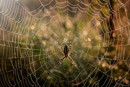 Foto de Spider in the middle of the spider web - Imagen libre de derechos