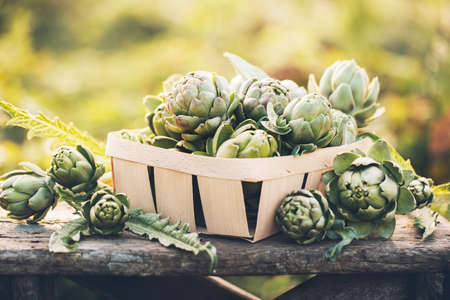 Photo for Artichokes in the box against the green of the garden. Vegetables for a healthy diet. - Royalty Free Image
