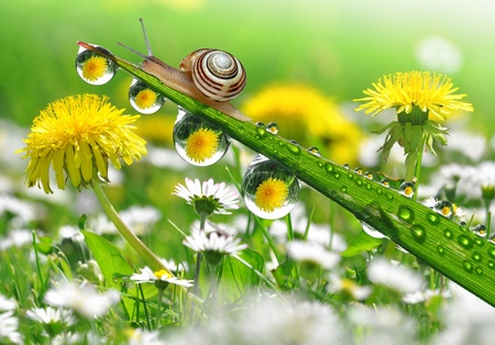 Photo for Snail on dewy grass  - Royalty Free Image