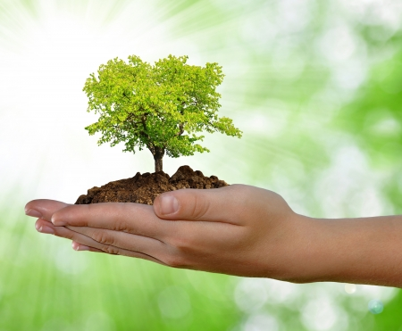 Photo pour growing tree in hand on green background  - image libre de droit