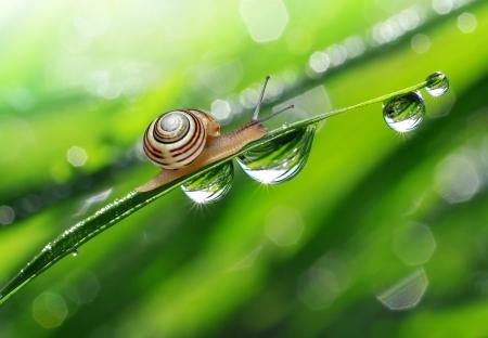 Photo pour Snail on dewy grass  - image libre de droit