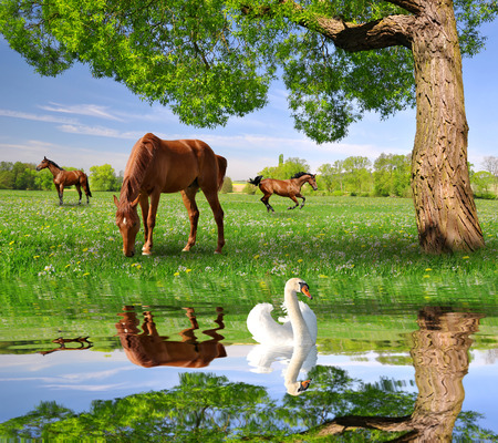 Herd of horses in a spring landscape mural