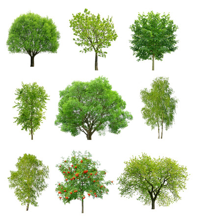 Foto de Great collection of deciduous trees isolated on white background - Imagen libre de derechos