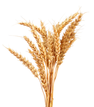 Photo pour Wheat isolated on white background - image libre de droit