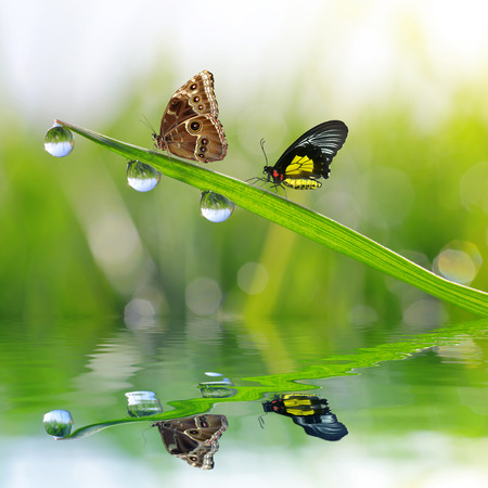 Photo for Fresh green grass with dew drops and butterflies. Natural background. - Royalty Free Image