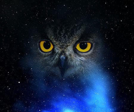Foto de Eyes eagle owl in the night sky - Imagen libre de derechos