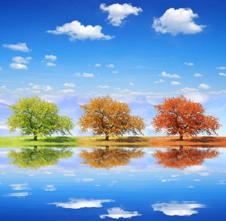 Foto de Seasonal trees with blue sky - Imagen libre de derechos