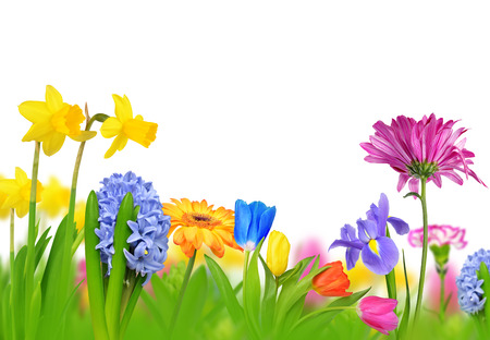 Photo for Colorful spring flowers isolated on white background. - Royalty Free Image