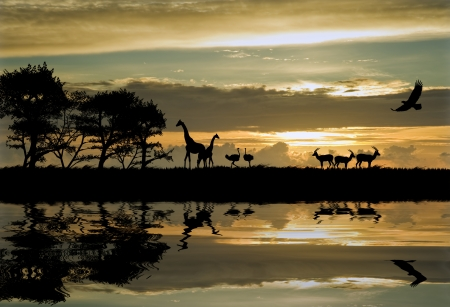Silhouette of animals in Africa theme setting with beautiful colorful sunset