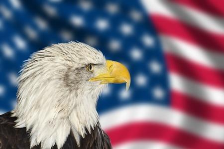 Foto de Portrait of American bal eagle against USA flag stars and stripes - Imagen libre de derechos