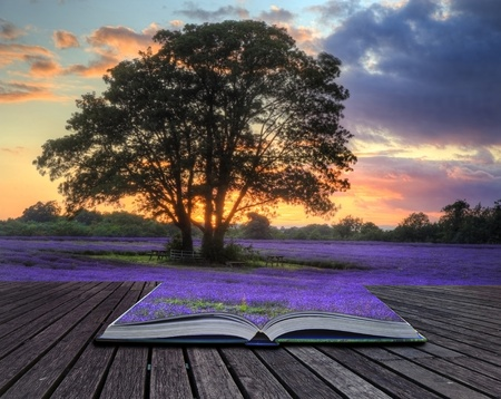 Foto de Beautiful image of stunning sunset with atmospheric clouds and sky over vibrant ripe lavender fields in English countryside landscape coming out of pages in magic book, creative concept image  - Imagen libre de derechos
