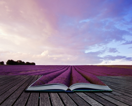 Photo pour Creative composite image of Summer lavender landscape in pages of magic book - image libre de droit