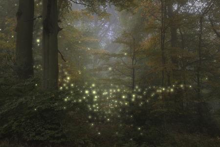 Foto de Stunning fantasy style landscape image of fireflies glowing in night time forest scene - Imagen libre de derechos