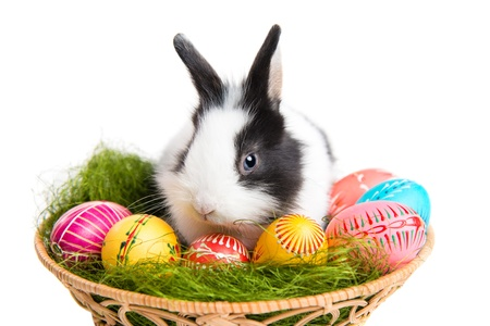 Cute Easter bunny, grass and painted eggs in nest, isolated on white background