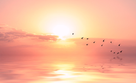 Photo pour beautiful sky on sunset or sunrise with flying birds to the sun, natural background - image libre de droit