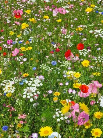 Photo pour wild flower on a meadow - image libre de droit