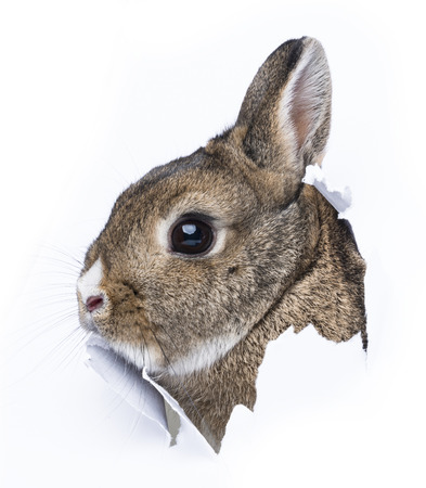 a little rabbit looks through a hole in a paper