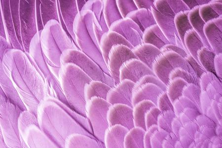 Foto de pink angels feather - close up in detail - Imagen libre de derechos