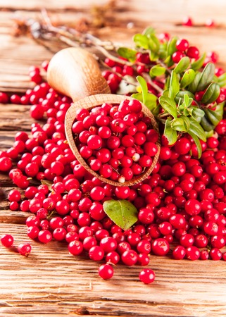 Photo for cranberry  - Royalty Free Image