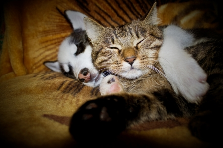 Sleeping puppy and kitten