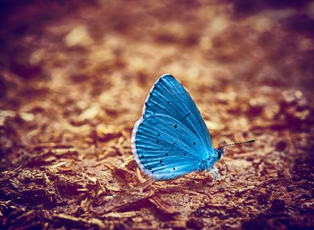 Foto de Blue butterfly vintage photo - Imagen libre de derechos