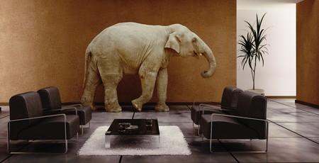 Photo pour modern interior with elephant inside (3D rendering) - image libre de droit