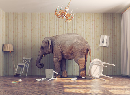 Foto de a elephant calm in a room. photo combinated concept - Imagen libre de derechos
