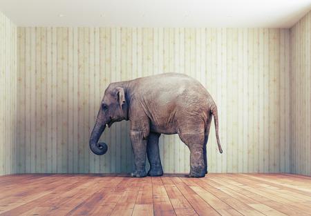 Photo pour lone elephant in the room. Creative concept - image libre de droit