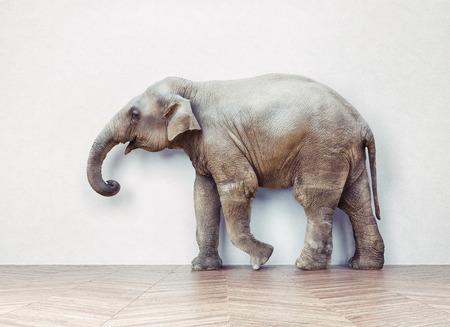 Foto de the elephant calm in the room near white wall. Creative concept - Imagen libre de derechos