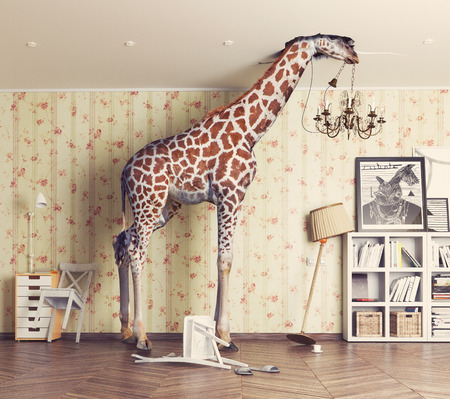 Photo pour giraffe breaks the ceiling in the living room. Photography combination concept - image libre de droit