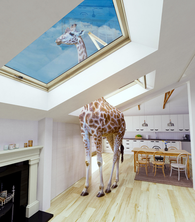 Photo pour Giraffe looks out into the attic window. Media mixed concept. - image libre de droit