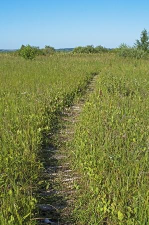 Footpath through the swamp of poles. Shore of lake Nero near Pereslavl Zaleski, Russia
