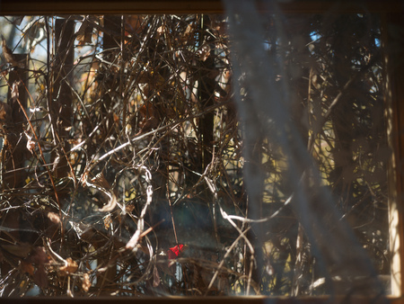Photo for View throgh the window and thicket behind it, shallow depth of field cropped shot - Royalty Free Image