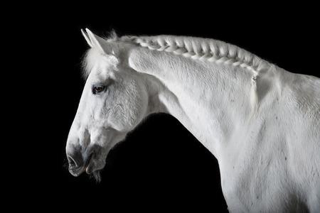 Foto de White horse on the black background - Imagen libre de derechos