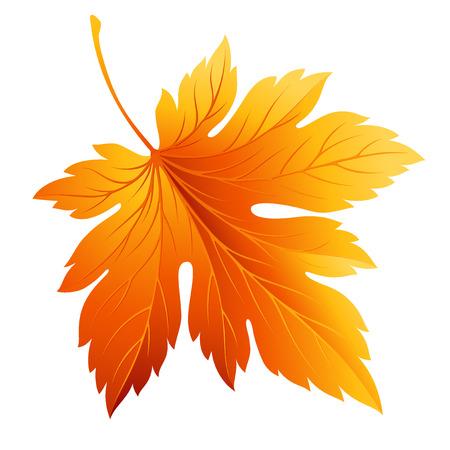 Illustration pour Fall leaf isolated on white - image libre de droit