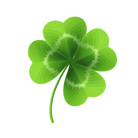 Illustration for Four leaf clover isolated on white. Vector illustration. - Royalty Free Image