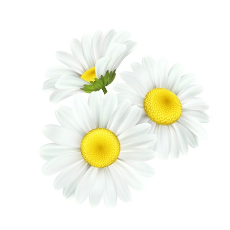 Ilustración de Chamomile daisy flower isolated on white background. Vector illustration EPS10 - Imagen libre de derechos