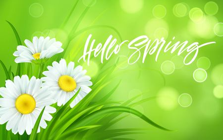 Illustration pour Spring background with daisies and fresh green grass. Hello Spring handwriting Lettering. Vector illustration EPS10 - image libre de droit