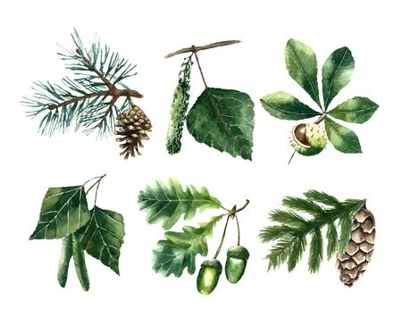 Illustration for Set of watercolor leaves: pine, chestnut, oak, beech, poplar, fir brunch. - Royalty Free Image