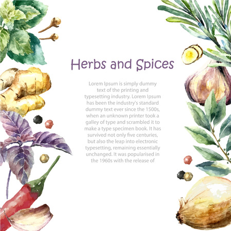 Ilustración de Watercolor herbs and spices frame. Hand painted food objects: mint, basil, rosemary, parsley, oregano, thyme, bay leaves, green onion, ginger, pepper, vanilla. - Imagen libre de derechos