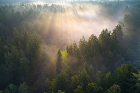 Photo for Aerial photo of Hrodna forest (Augustow forest) - Royalty Free Image