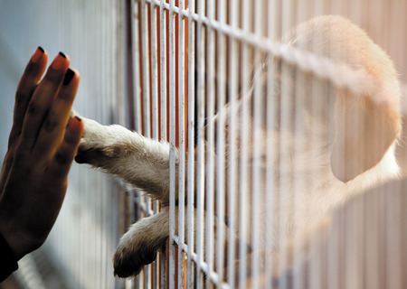 Foto de Human hand is touching a cute little doggie paw through a fence of a adoption centre. - Imagen libre de derechos